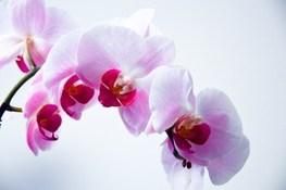 Bloom Flora